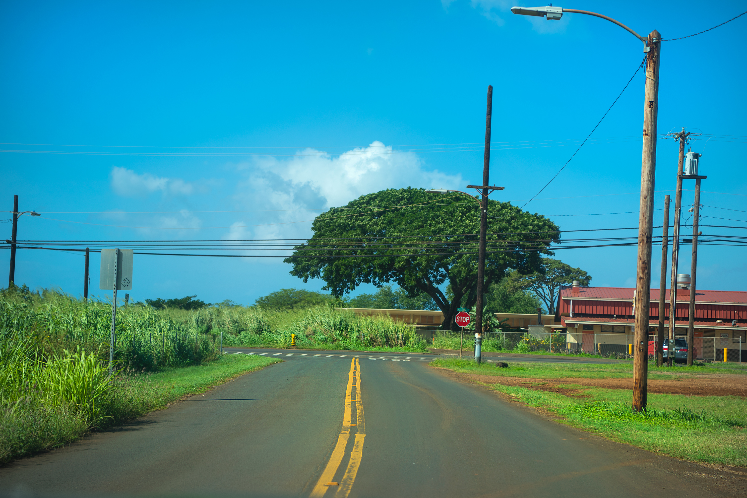 Countryside of Haleiwa