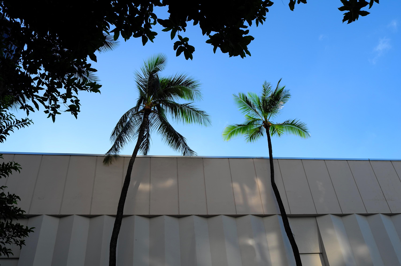 Twin Palmtree