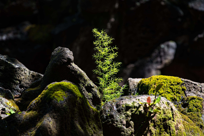 Makiki Forest