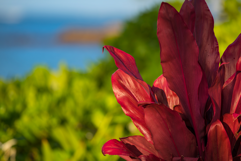 Island Vivid Colors