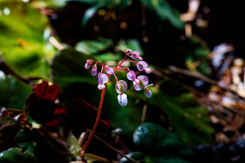 Wild Forest Flower