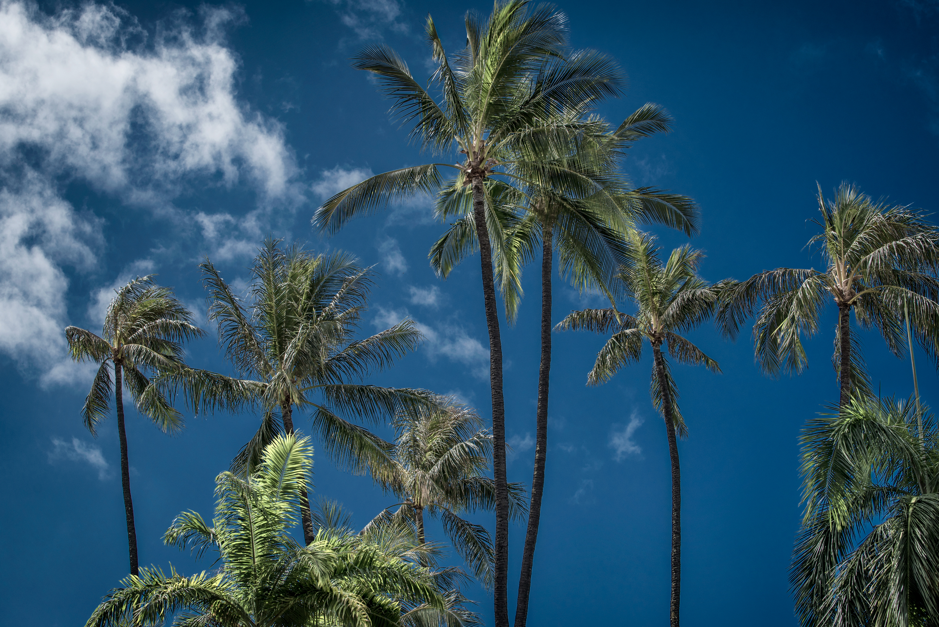 Bluesky and Palmtrees