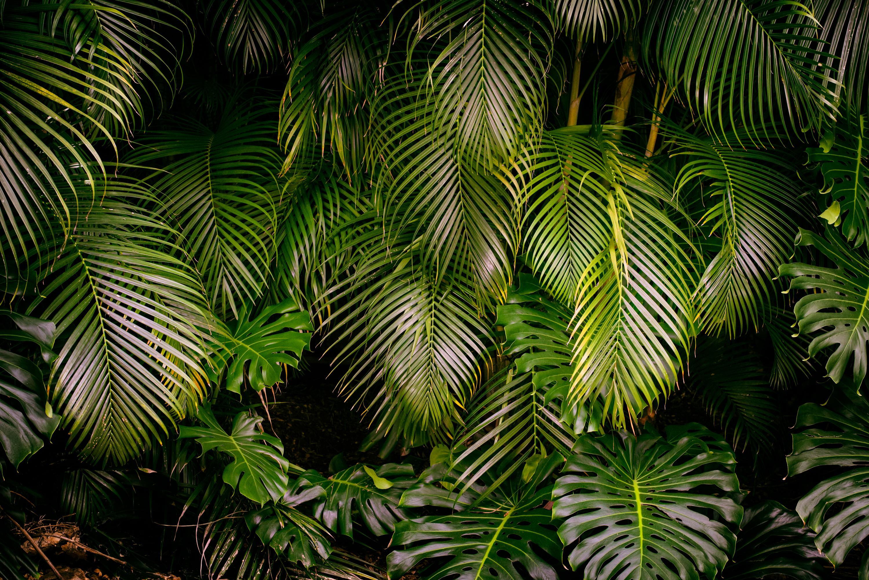 Island Greens