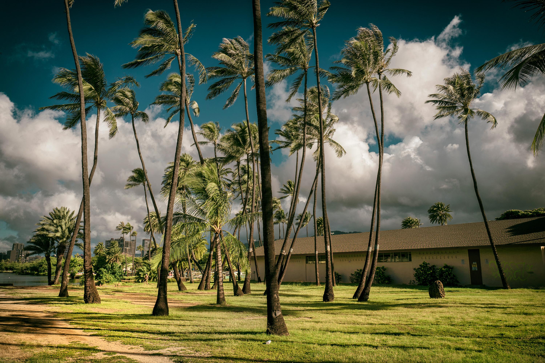 Palmtrees, AlaWai