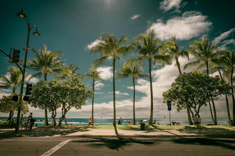 Waikiki Daylight