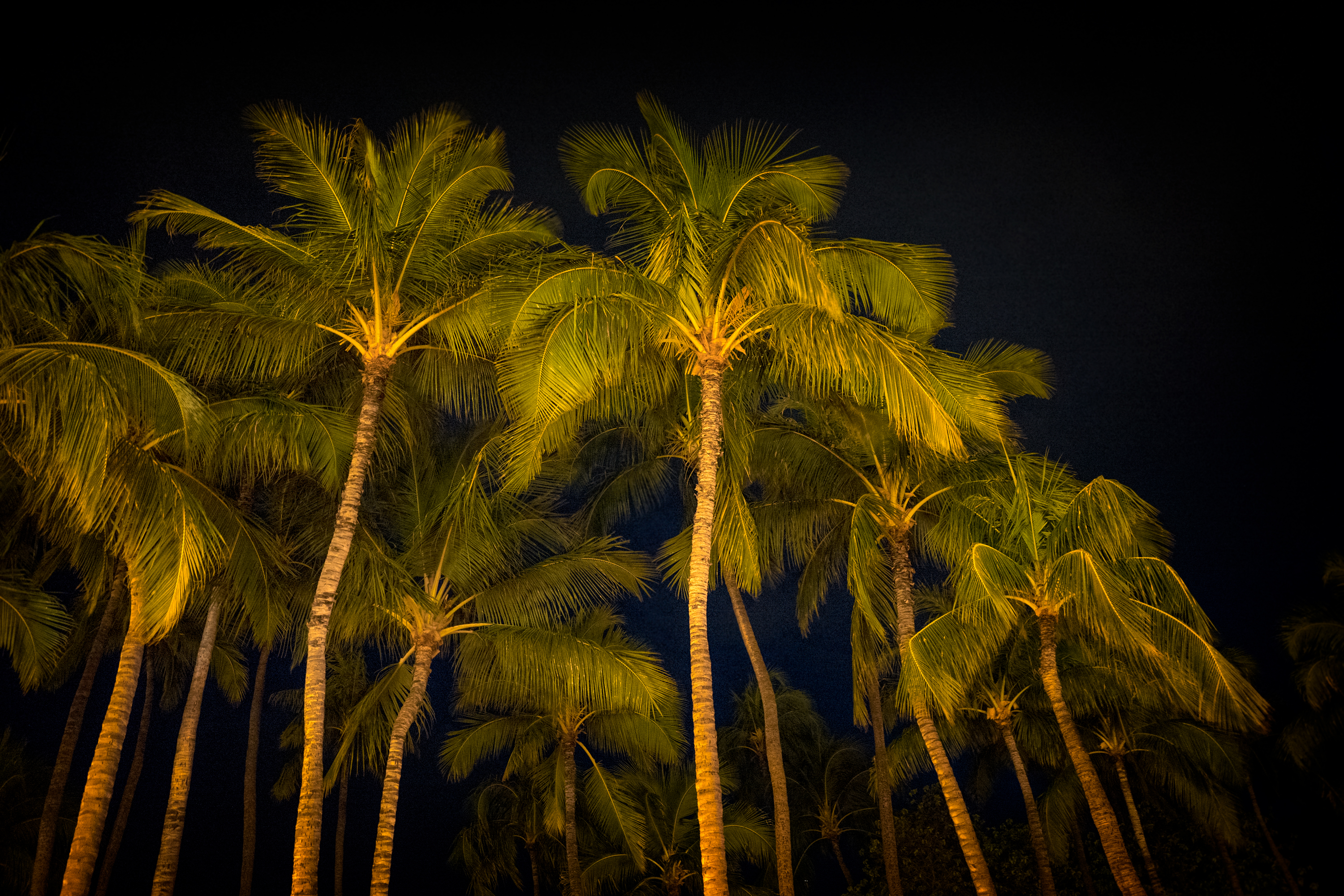 Night In Waikiki Beach