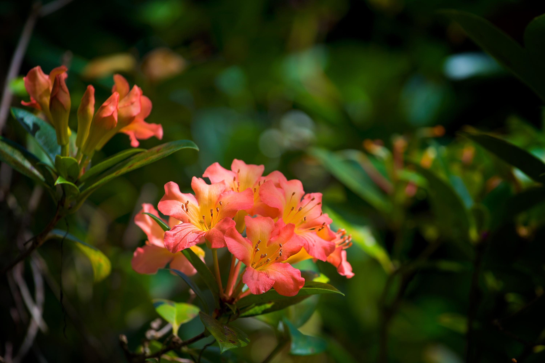 Island Wild Flower