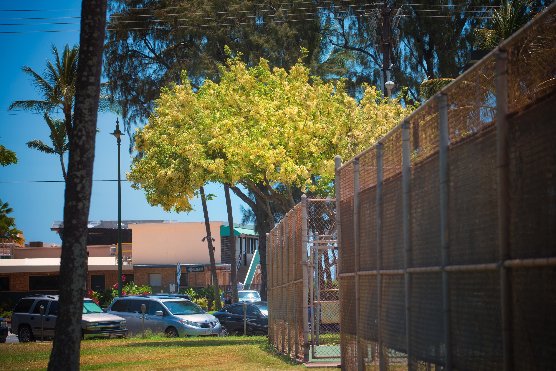 Shower Tree